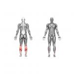 جامعترین تمرینات برای تقویت عضله ساق پا