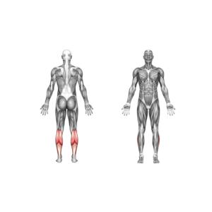 تقویت عضله ساق پا