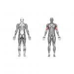 بهترین حرکات جلو بازو که هر ورزشکاری باید بداند+جلو بازوی خطی