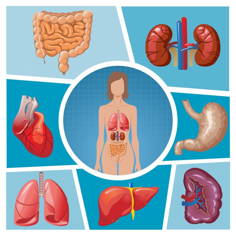 ترکیبات تشکیلدهندهٔ بدن